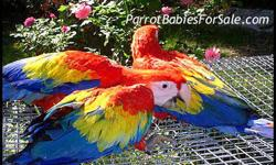 We have several breeding parakeets )We also have a Breeding colony set-up of 3 pair 250.00 for cage boxes & keets .We have single keets $10.00-discount to 8.00 for 6 or more