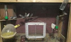 I have many pairs of Canaries and Hava finches that need homes: I'm asking - $100 a pair for Canaries - $80 a pair for Hava Finches This ad was posted with the eBay Classifieds mobile app.