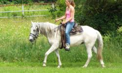 Beautiful registered Paso Fino mare, just turned 20 years old; acts and looks younger; 14.1 hands; no vices; easy keeper; up to date on shots, teeth floating, worming, feet trimming; negative coggins; no time for her and she would love to bond with her