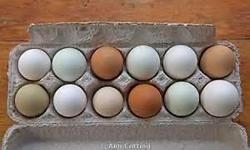 Fresh country Eggs for sale , small white or cream colored eggs 1 dollar a dozen ,EX large brown eggs 3 dollars a dozen , duck eggs 4 dollars a dozen .duck eggs are great to eat or cook with . all are grain feed for great clean flavor.