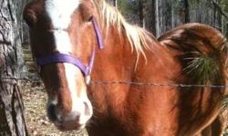 12 year old barrel horse for sale. Would be the perfect horse for a child/teen wanting a faster barrel horse. Or for an adult wanting to barrel race. Scarlett would also be good for ranch work, as she has a lot of go. This ad was posted with the eBay