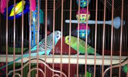 I am a student who got birds for a birthday gift, however, I am not as available as I was to offer as much care as any pet needs. They are healthy, bought from PetSmart in June 2012. Howard is blue, black and white, and Winston is green, yellow, and