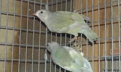 4 gouldian finch males 2014 - $45 ea. 530-300-1866