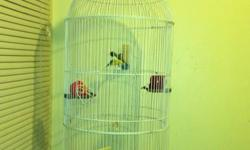 Hi I have a pair of gouldian finches am asking $125 with the cage and them food please contact me @(619) 992-20 48.nicolas This ad was posted with the eBay Classifieds mobile app.