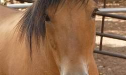 Grade - Abby - Medium - Senior - Female - Horse Abby is a Quarter Horse cross who was born in 1987. This lovely sorrel mare lived most of her life out on Utah rangeland with plenty of room to roam. Unfortunately, Abby tangled with a fence and suffered