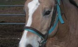 Grade - Jessie - Medium - Young - Female - Horse Jessie is 1 1/2 to 2yr old bay yearling. she is very sweet and loves treats. She will follow you around the pasture when you clean and let you touch her face on her terms but other then that she is not