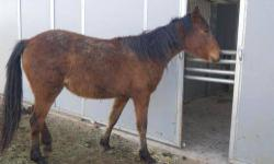 Grade - Sassy - Medium - Adult - Female - Horse CHARACTERISTICS: Breed: Grade Size: Medium Petfinder ID: 25508354 CONTACT: Sacramento County Animal Care and Regulation | Sacramento, CA For additional information, reply to this ad or see: