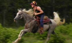Rocking T Stoney (AHR 558873) 16 yr old grey Egyptian bred Arab gelding. Because we are uncertain of his past he needs experienced, patient, confident & LOVING owner/rider/handler. We WILL be selective on where Stoney goes!! Bred by Black Oak Arabians,