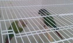 I have a pair green cheek for sale asking $250 if you interest text or call 774-245-9542
