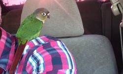I have this cute lil Green Cheek Conure baby Parrot. He's sweet, kind, and loving. I have to sell it because I don't get time for him I got really busy with my life. I got him about 2 months ago I was told it was hand feed by the breeder and was told it