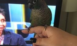 My conure is 1 year old! Love me but hasn't warmed up to my hubby or kids! I need to find him a him where some one can work with him and be patient! He comes with the rest of his food and cage asking 150 dollars firm! This ad was posted with the eBay