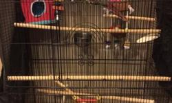 I have a very sweet beautiful green cheek conure that needs a new home. He loves attention and to be hand fed. I am selling the cage and all the contents in the cage (toys, bowls, perch, etc) for only 250.00 Cage alone was over 100.00