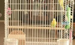Green cheek conure born in December very tame, loves to be held. Comes with large cage. Will send pics.