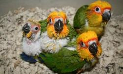 we have 4 half moon conures available parent raised 125 each no email or text if interested call 979-406-0037