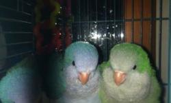 Have several baby parakeets ready for new homes. They are energetic sweet, and completely tame. Great beginner birds. Come with hatch certificate, toy, caresheet and cardboard carrier. $25 each with out cage.