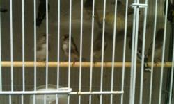 i have 50 himalayan gold finches for sale. Males & fimales $49 each This ad was posted with the eBay Classifieds mobile app.