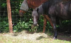 Black Quarter horse mare 12 years old. Great ride English or western and loves gymkhana. 15.2 hands very sweet horse. Call or text Jennifer 860-605-4838 This ad was posted with the eBay Classifieds mobile app.