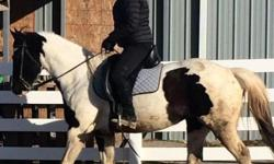 Horse for sale of lease. 9 year old black and white paint mare. She has had one foal and is great on trail rides. She has been ridden dressage and western. She has jumped in the past. She is good around cattle and very sound. Up to date on shots and