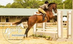 This is the perfect situation for a DC or Alexandria professional who is a re-rider (coming back to riding after years away) or tall teen to lease a gorgeous, confidence-building horse and get trained by an A-circuit professional. Soft Landing Stables is