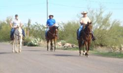 Riding season is here! Do you enjoy hanging around horses? Have you always wanted a horse but don't have anywhere to keep it? Then come and lease one of our gentle and dependable trail horses. Monthly fee of $150.00 includes all expenses. We have