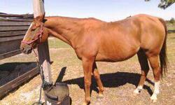 I have two horses. Both are males, and are very sweet. will have hooves done on 5/10/2013, Must BRING your own trailer. Email for any more information! Sorrel Painted who just turned 13 years old, 15hh. Chestnut coloring. Great trail horse! Doesn't bite,