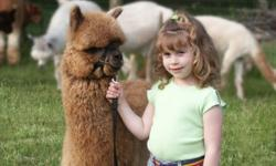We are serious sellers! It is time for us to retire from the business and we are offering extremely good deals - if you have or are considering starting a business with alpacas you will not be able to start up with better deal. We will offer packages or