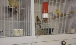 For sale 40 canaries by owner need new homes for them im moveing to new place and cant take them please call me at 7742630065