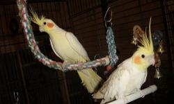 I HAVE THREE MALE COCKATIELS: ALL MALE ARE GRAYS AND TWO FEMALE COCKATIELS : ONE PEARL I AM ASKING 80.00 FOR THIS ONE,ONE GRAY I AM ASKING FOR 60.00. I ALSO HAVE ONE WHITE FINCH I AM ASKING 30.00 FOR IT. AND THREE PARAKEETS 25.00 EACH I ALSO HAVE CAGES.