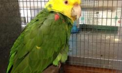 Hi I'm Kim I'm wanting a parrot if anyone doesn't won't there big bird I'm very interested I can't afford to buy one. If anyone wants to just give one away. I can give the parrot a good home. Been wanting one for years. Thanks from kim