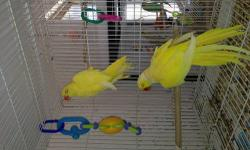 Pair of indian ringnecks. Both green and healthy birds Sking 250$ obo text or email inable to get calls thanks 6232251588 espanol tamb