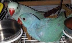 i have 2 baby indian ringnecks, they are 5 weeks old. i am willing to drive a little ways to meet. i live in douglas ga please text me if interested