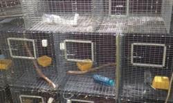 Hi I have a few cages for lovebird for sale 305-962-3989. Buenas tengo algunas jaulas para lovebird para la venta llamar 305-962-3989 This ad was posted with the eBay Classifieds mobile app.