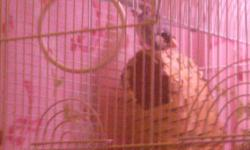 We had purchased a pair of Java (Rice) finches, & also a pair of orange Weavers for pets. After having them for a month now, have found out we have allergies to them. This is very sad, as only the males will sing, and both of these finches have a pretty