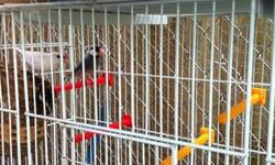 I am selling a pair of Java Sparrow Finches that are about a year old an a large, long cage that can be divided into 4 cages. The cage is in great condition. This ad was posted with the eBay Classifieds mobile app.