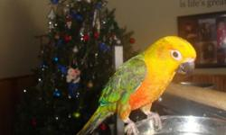 This is our last jenday conure for the year! This baby is ready to go home now! Contact me for more information. This ad was posted with the eBay Classifieds mobile app.