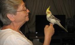 Just weaned baby cockatiels ready to be rehomed have 1 Pied and 3 pearls left. Please call If interested Rehoming fee (813) 788-0507