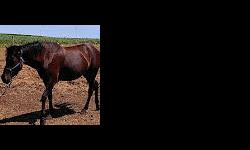 16 year old 15 hand sorrel grade Quarter horse gelding. Rides great with another. Can ride alone with a better rider. $1500.00 cash. & 20 year old 14 hand bay Arab mare, been there done that. Light riders preferred. Needs to be in stall at night in winter