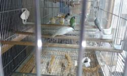 We have several gouldians for sale. Price depends on colors. We ship.