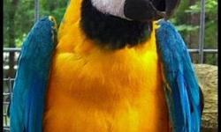 I have just sold out of my Macaw Breeders, I have 4 Macaw Feather Farms Metal nest box's for sale. You will never have to buy or build a box again. All Macaw nest box's are 75$ each I paid 150$ each plus shipping. Also my husband makes THE BEST Congo