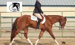 Would you like a better relationship with your horse? Would you like to learn to ride or strengthen or skills? Are you interested in learning more about showing western pleasure, hunter under saddle, showmanship, trail, or equitation? We offer lessons and