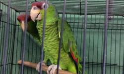 Proven Pair, 3 yrs call for more info call Arrieros Pet Shop.. 619-677-3269