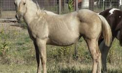'Ginger' - She is on the left AQHA Palomino Roan Filly Born 03/25/2012 Sire - LOTSA JETTING PEP Dam - SUPER LANI CHELENAS Great prospect for arena, rodeo, barrels, poles, cutting, reining, trail or all around. More pictures are posted on Mott Ranch