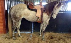 Are you looking for a barrel horse for you or your daughter? Well I may have just what your looking for! I am not a dealer I'm a trainer I buy train and sell my own horse and they will be exactly what I tell you they are you don't have to worrie about