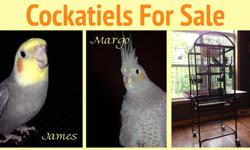 i am looking for a cockatiel or 2 cockatiels! i do have experience with birds and this specific breed. i will give a great home as i have a conure, 2 canaries, a cockatiel, and 3 parakeets! i would like a baby cockatiel/cockatiels. it doesnt matter if