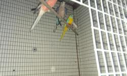 Looking for normal female élégant in breeding condition.Pete 714-399-5518