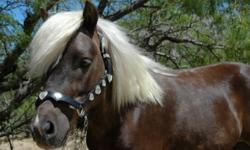 Hi, I am new to the Ramona Area and have a house on 5 acres, 3 pastures, a mare motel with 5 stalls, a riding arena and an exercise pen. I would really like to help a Horse Rescue Organization by fostering a few horses. I would need the organization to