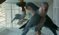 I lost my Parrot after 3 yrs and need another baby bird to raise. I'm responsable and work out of my home. I will pay a fair price to a breeder. Please call me at 870-778-0104- Ron