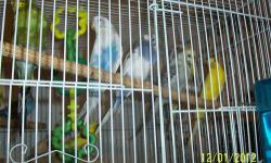 im looking for 3 parakeets to add to my family! i have a parakeet who is lonely and would like some buddies! please email with some info and pics if available! they will have a great and loving home! male or female it doesnt matter! dont have to be tame