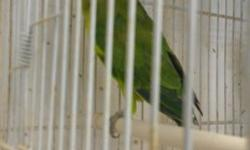 Looking for a couple of Plum head parakeet. Adult ready to breed. Please call or tex... 7864885939.