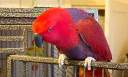 Hello, I am looking to adopt a Parrot as a pet only. I am experienced with all sizes of birds and behaviors. Should you be considering re homing your bird, please consider me. I am not financially able to pay a lot of money for a bird at the moment. I